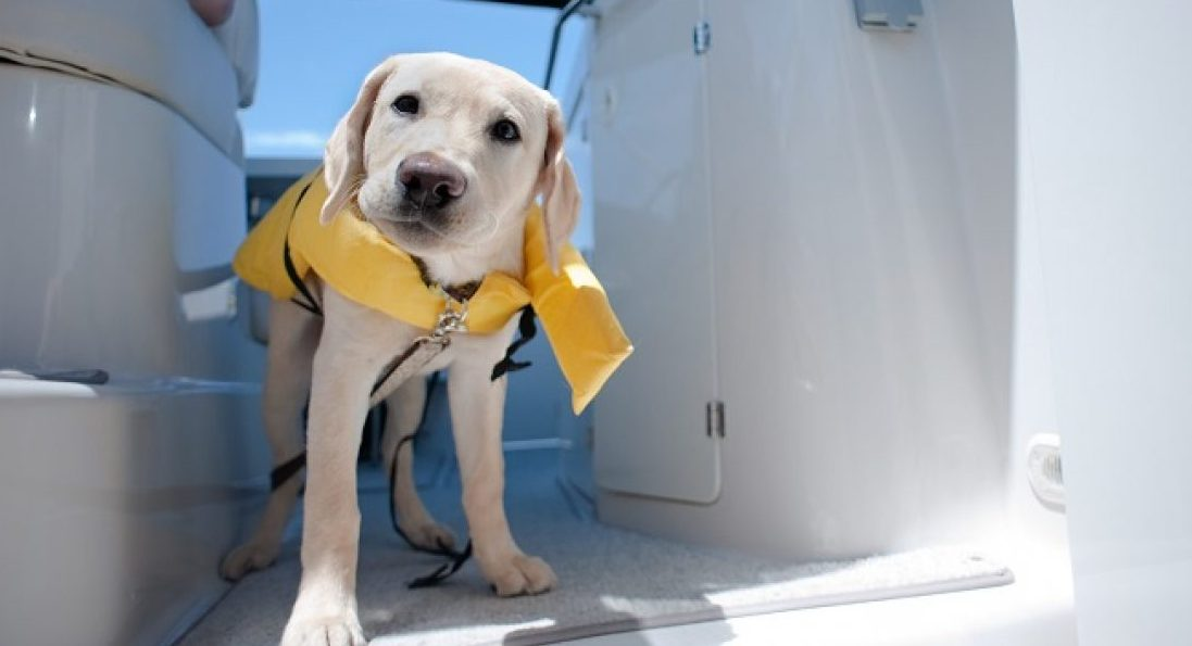 dog boating safety